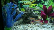 Fish Tank with stand and fish