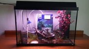 Juwel Rekord 96 Aquarium in excellent condition for sale.